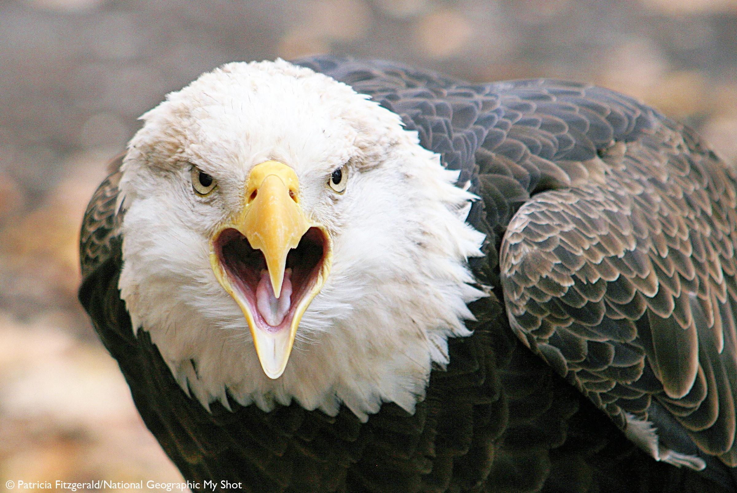 angry bird wallpaper  dreamsky10com